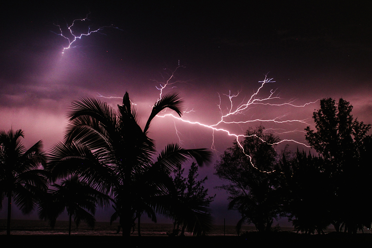 Lighting in a night sky with palm trees in foreground