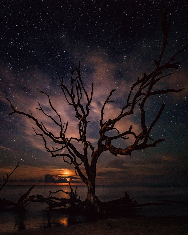 Bare tree on shore with starry night sky