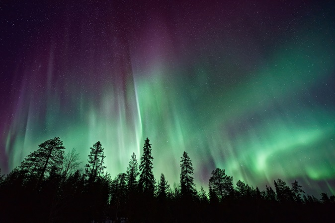 Aurora borealis with silhouette trees in foreground