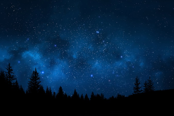 Landscape showing trees against sky full of stars