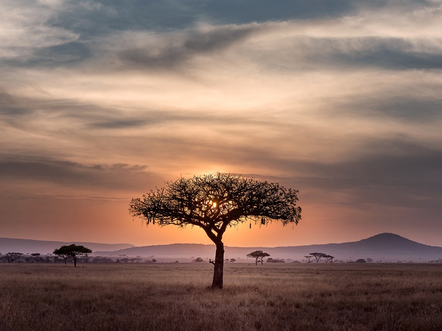 Single tree on the savanna with sun behind clouds