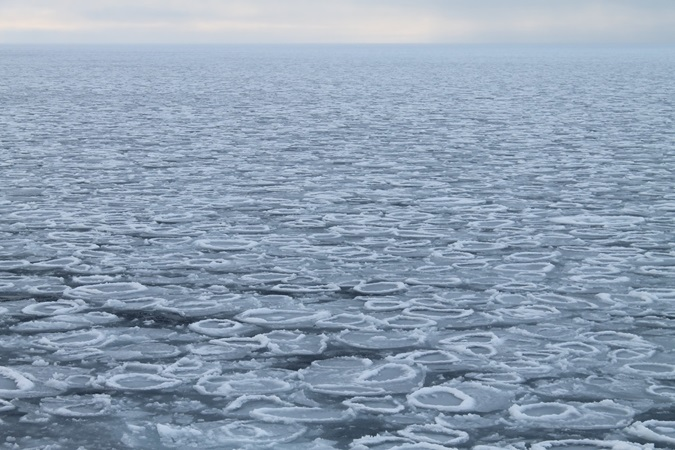 "Circular sea ice known as ""pncake"" floes in the Arctic."