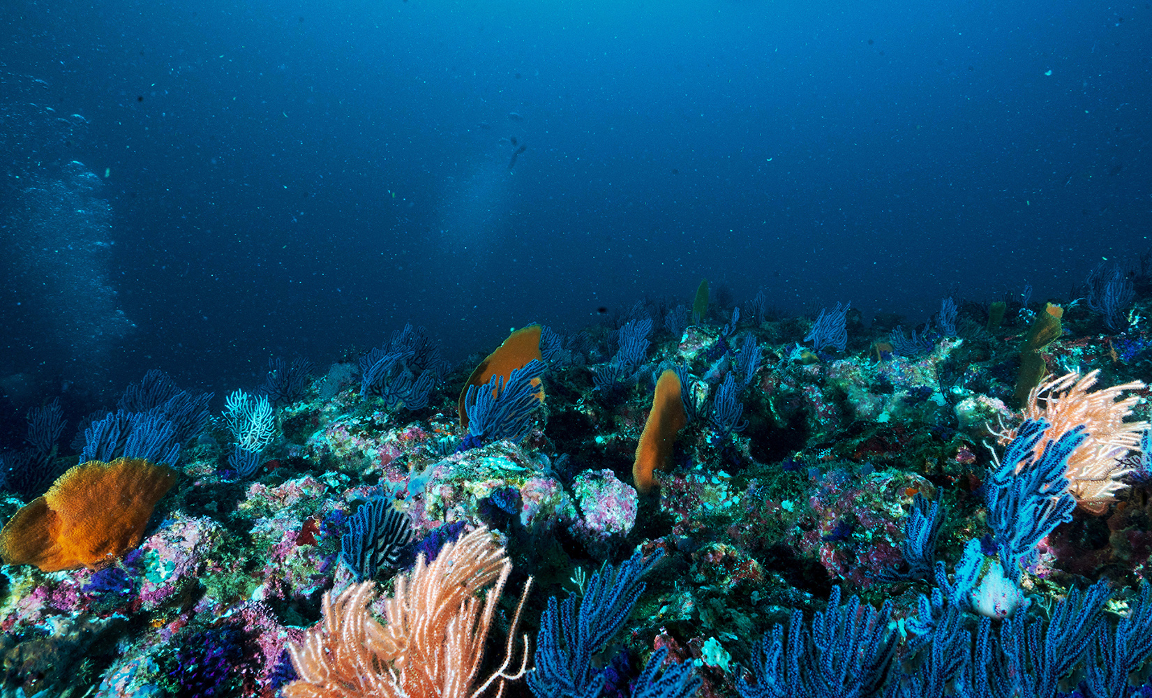 Underneath ocean with colorful coral and fish