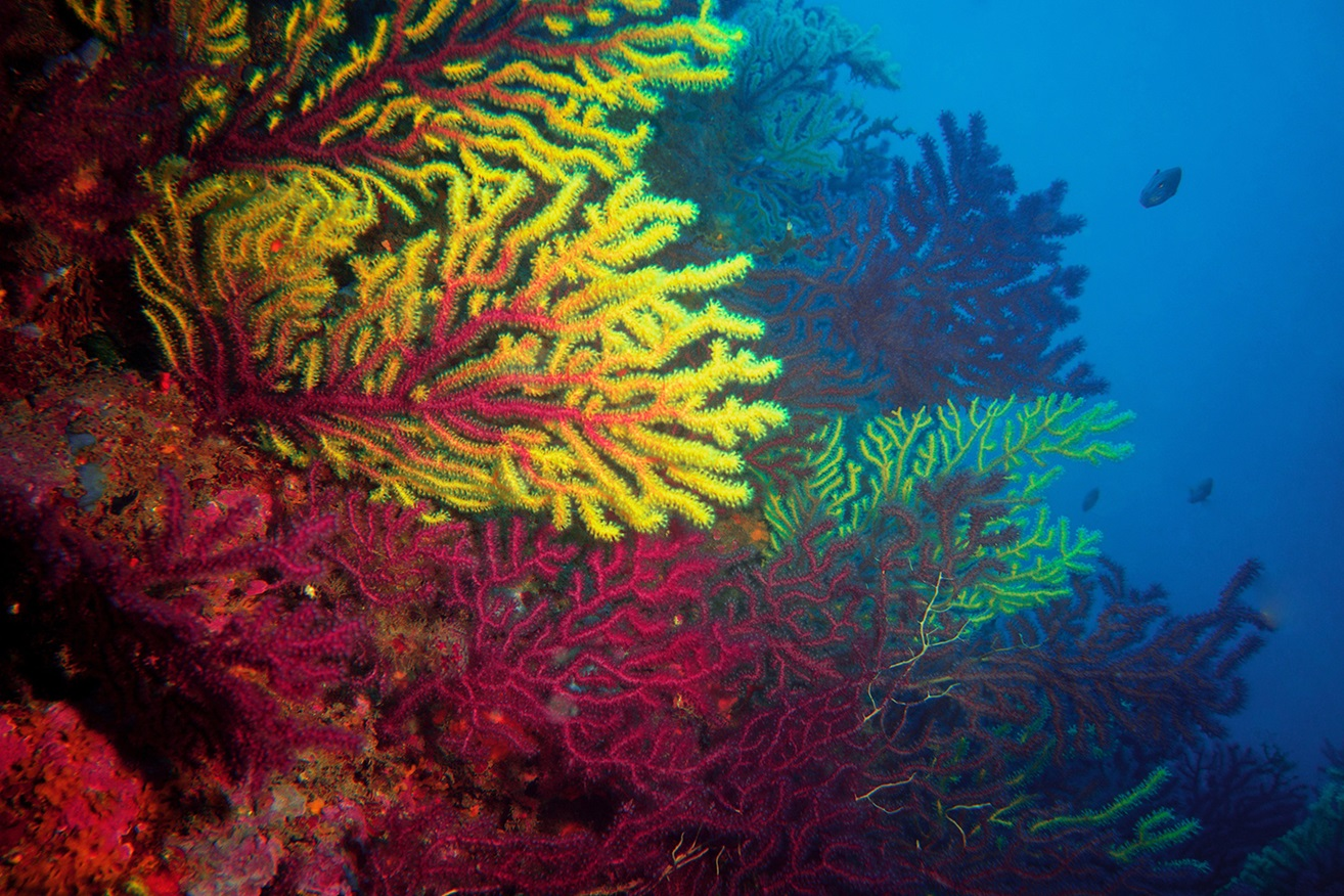 Underneath ocean with colorful corals and fish