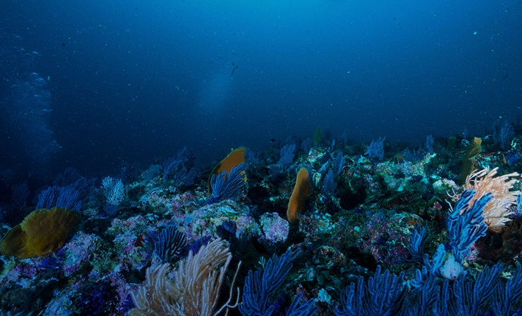 Underwater scene with coral and fish