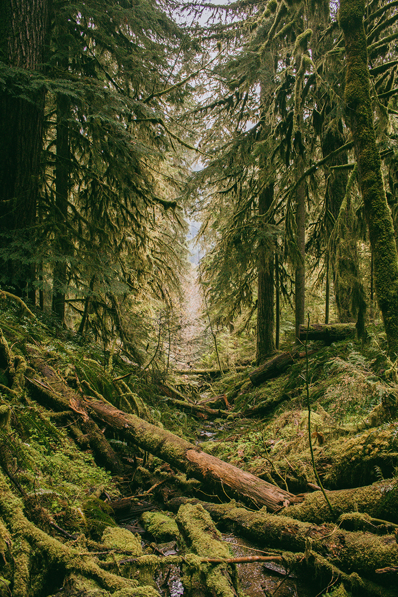 Moss covered forest in the Pacific Northwest