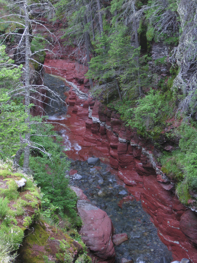 Stream flowing through gorge in forest
