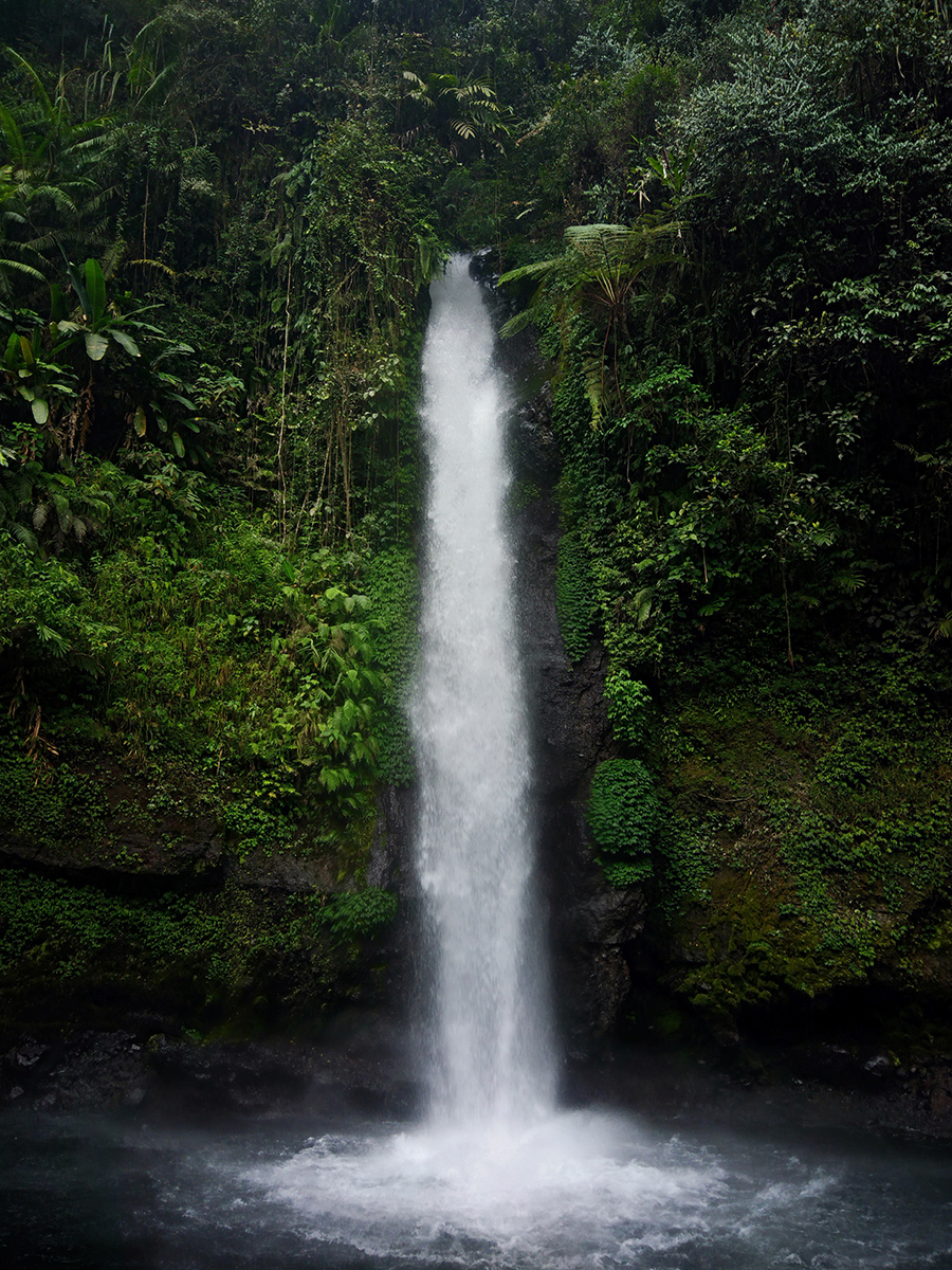Single waterfall surrounded by lush forest